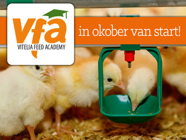 Vitelia Feed Academy van start